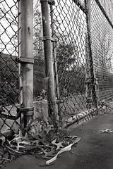 Chain link fence and gate (eqqman) Tags: williamsport pennsylvania chain link fence gate chainlink blackandwhite