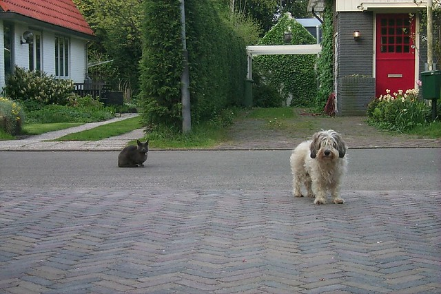 About cats and dogs