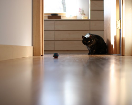 Kitty stalks ball (start)