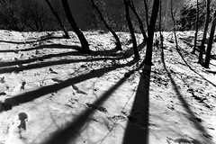 Shadow Steps 2 (DanielN) Tags: bw snow toronto contrast wow topf75 highpark been1of100 topv999 100v10f fv10 topf100 4winter
