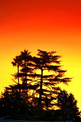 Enchanting Evening!! (CharlieBrown8989) Tags: california trees sunset orange usa yellow gold yahoo losangeles interestingness flickr zoom dusk picasa best palm explore pines tele charliebrown8989 corel altadena paintshopprox