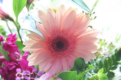 Pretty Pink (Living Juicy) Tags: flowers flower livingjuicy