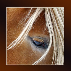 Quiet* (Imapix) Tags: portrait horse canada eye art nature animal canon hair photography photo foto photographie image quebec qubec mostinteresting eyelash imapix topfavpix gatangbourque gatanbourque copyright2006gatanbourqueallrightsreserved  copyright2006gatanbourqueallrightsreserved gaetanbourque animalkingdomelite pix50 imapixphotography gatanbourquephotography