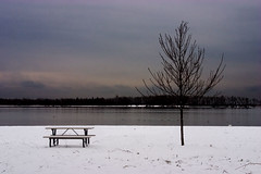Picnic Table and Tree (|Shrued) Tags: nycpb cherrybeach picnic table tree toronto snow