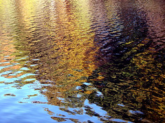 Fall colors reflecting in pond (roddh) Tags: autumn reflection fall texture water topv111 sony cybershot f707 roddh