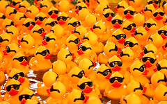 Rubber Ducks with Sunglasses
