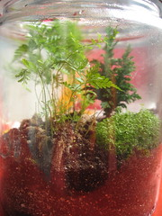 my cookie jar (R.bean) Tags: terrarium miniplants fern rabbitfootfern moss minipine