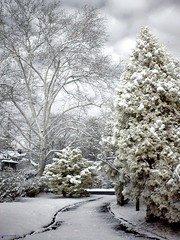 First Snow (Cocoabiscuit) Tags: winter snow philadelphia home ir top20winter explore cocoabiscuit