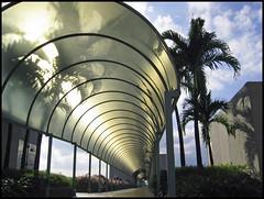 Hallway (roomman) Tags: 2004 singapore nanyang university ntu nanyangtechnologicaluniversity technologicaluniversity walkway hallway architecture canopy roofing campus asia southeastasia vanishing