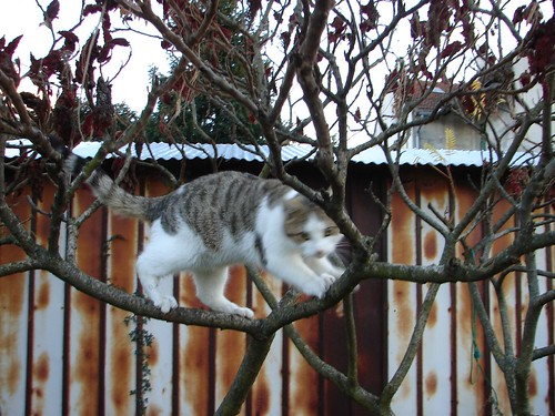 The cat on the tree
