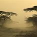 2005_1112 dusty land