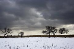 About to cry (Shahin Edalati) Tags: se shahin creepy scary winter cold mrjackfrost ice snow edalati xt 350 interesting