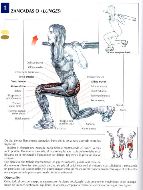 Todos los Musculos y Todos sus Ejercicios [Para el gym] - Deportes ...
