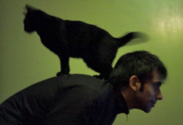 black max green cat blackcat very reason horoscope melodrama astrology marmalade sagittarious wavytail mermeladeya wheretogofromhere
