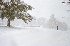 Blizzardy (Plutor) Tags: winter snow lenstagged m blizzard minoltasrt202 minolta50f14 naugatuck naugatuckct