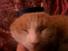 (Marchnwe) Tags: cat cats purple ring whiskers sleep finger red orange tag1 tag2 tag3 taggedout