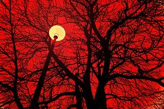 holiday moods (Wen Nag (aliasgrace)) Tags: christmas xmas red sky black tree topf25 silhouette vintage wow explorer shapes lookingup explore topv777 brackets windowshopping 1in10f50v aliasgrace