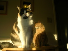 afternoon (marginscribbler) Tags: cats gatos chats kitties kittycats meow miao spooky macho