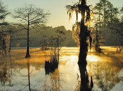 monday monday (M t H) Tags: sunrise fog southcarolina lake reflection 121205 mth bravo topv111 topf25 100v10fav