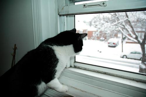 Harry by the Window
