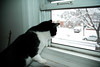 Harry by the Window (S.D.) Tags: cats snow nycpb nikon d70s nikond70s 1870mm