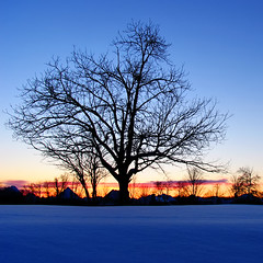 Eminent* (Imapix) Tags: blue winter sunset red snow tree nature soleil photo photographie crepuscule coucherdesoleil imapix eminent topfavpix gatangbourque gatanbourque copyright2006gatanbourqueallrightsreserved  copyright2006gatanbourqueallrightsreserved pix50 imapixphotography gatanbourquephotography