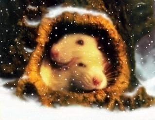 Winter Rats