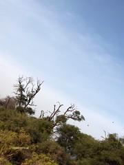 HPIM0972 (http://jvverde.birdsby.me/v2/) Tags: africa travel kenya frias safari viajes viagem lixo viagens vacations hollidays qunia lixo2