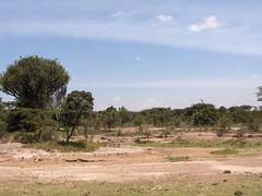 HPIM1399 (http://jvverde.birdsby.me/v2/) Tags: africa travel kenya frias safari viajes viagem lixo viagens vacations hollidays qunia lixo2