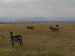 HPIM1603 (http://jvverde.birdsby.me/v2/) Tags: travel kenya safari viajes lixo viagens vacations hollidays qunia lixo2