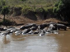 HPIM1637 (http://jvverde.birdsby.me/v2/) Tags: travel kenya safari viajes lixo viagens vacations hollidays qunia lixo2