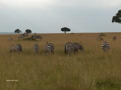 HPIM1673 (http://jvverde.birdsby.me/v2/) Tags: travel kenya safari viajes lixo viagens vacations hollidays qunia lixo2