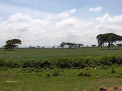 HPIM1812 (http://jvverde.birdsby.me/v2/) Tags: travel kenya safari viajes lixo viagens vacations hollidays qunia lixo2