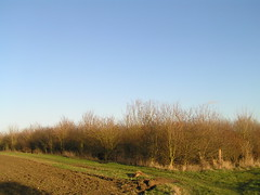 Essex winter countryside 13