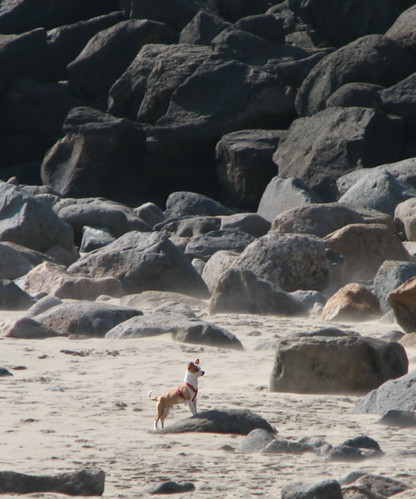 freckles the rugged pacific rock dog par emdot