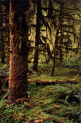 Hoh Rain Forest (bentilden) Tags: trees usa green yellow forest olympicpeninsula washingtonstate hohrainforest