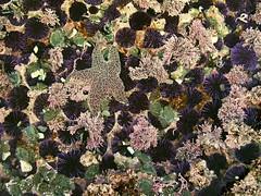 star garden - by artolog
