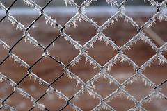 Cold (dnik) Tags: red snow net fence frozen dof mesh bokeh tenniscourt