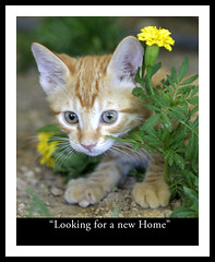 Looking for a New Home? (Domain Barnyard) Tags: usa cute 2004 closeup cat kitten lasvegas august canoneos20d whiskers nv verdeeamarelo tingey