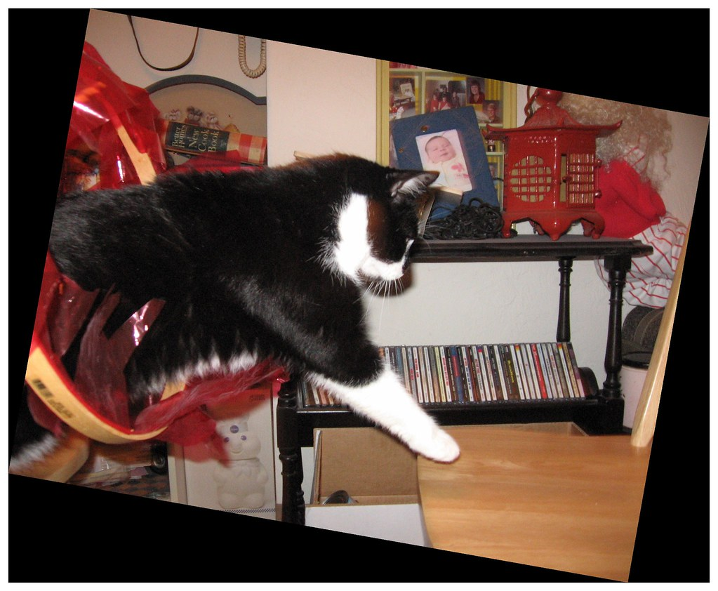 """#5 Gradually Make it So Your Cat Must Leap through the """"Ring of Fire"""" Hoop to Get the Reward"""