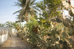 """Cactus road • <a style=""""font-size:0.8em;"""" href=""""http://www.flickr.com/photos/69554238@N03/18326476893/"""" target=""""_blank"""">View on Flickr</a>"""