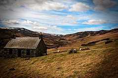Glen Quaich1(2) (evs.gaz) Tags: scotland sheep farm perthshire falls glen fields roads killin dochart quaich