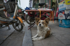 china old travel dog pet cute eye animal zeiss wow puppy fur lost nice blurry eyes furry funny fuzzy bokeh sony wheels adorable ears what aww doggy smirk 中国 pup fullframe shanxi pingyao puzzled 6d warmcolors 平遥 reddit 35mm14 pamhule jensschott jensschottknudsen 佳能eos6d