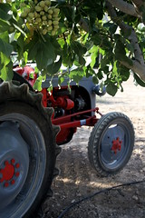 IMG_0377 (ACATCT) Tags: old espaa tractor spain traktor agosto toledo antiguo massey pistacho tembleque barreiros 2015 bustards perdices liebres avutardas ff30ds r350s
