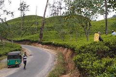 Tuktuk (Carrascal Girl) Tags: tea ella tuktuk srilanka ceylon teafactory teaplantation teaestate teapickers ceylontea teaharvest