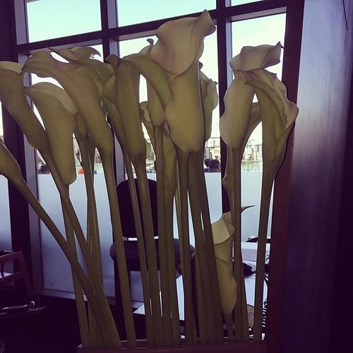 #lilies