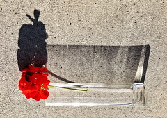 1 Red Object with Shadow Boom (reflection below) (Mertonian) Tags: shadow red 2 two flower texture glass sunrise canon wonder concrete dawn 1 stem with mark object cement boom powershot simplicity ll ordinary ineffable mertonian g1x robertcowlishaw canonpowershotg1xmarkii canonpowershotg1xmark2 monkofthewestdesertcom 1redobjectwithshadowboom