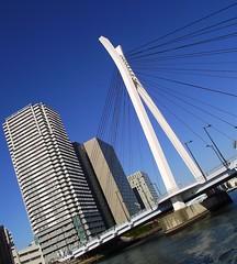 TOKYO SUMIDA RIVER BRIDGE (patrick555666751) Tags: tokyosumidariverbridge tokyo sumida river bridge bridges ponts pont puente puentes riviere nihon nippon cipango jipangu japao giappone japo edo kanto honshu tokio toquio japon japan asie est east asia building buildings brucke