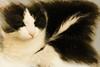 Tola también quiere desearos ¡Feliz Navidad! (Egg2704) Tags: gato gatos cat cats pet pets animal animales naturaleza naturalia tola egg2704