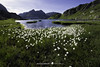 #003 Eriofori - Lago del Leìt (Enrico Boggia | Photography) Tags: leit leìt capannaleìt tremorgio leventina enricoboggia ticino eriofori prato